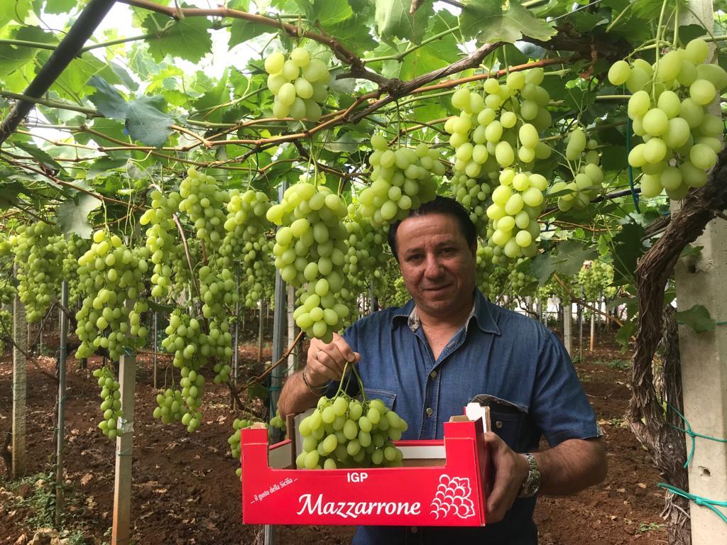 Al via la campagna dell'uva da tavola di Mazzarrone IGP | Sicilia da Gustare