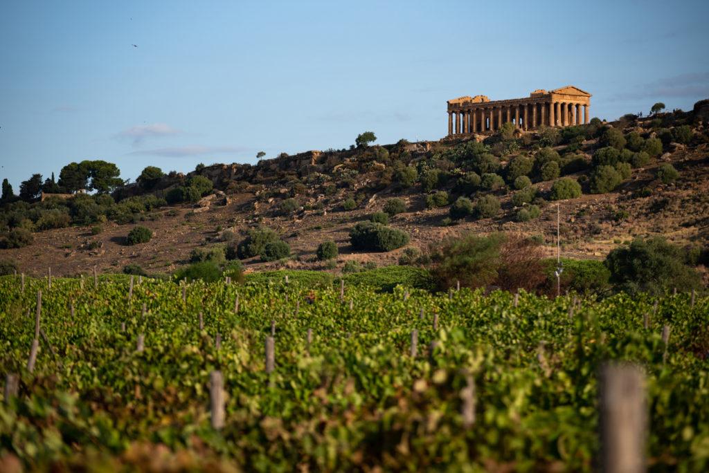 CVA Canicattì: un 2019 da incorniciare | Sicilia da Gustare