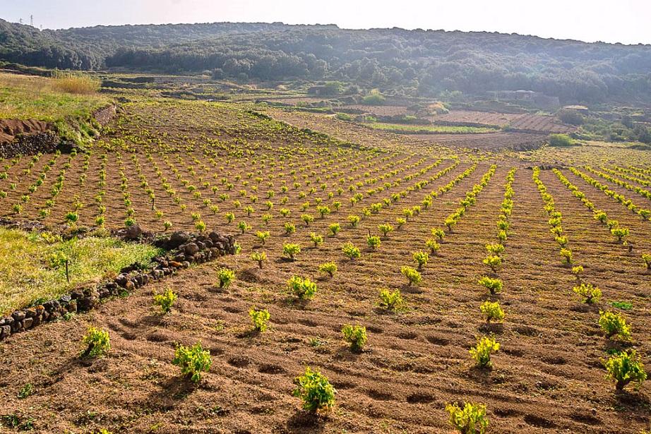 Nes Passito di Pantelleria | Sicilia da Gustare
