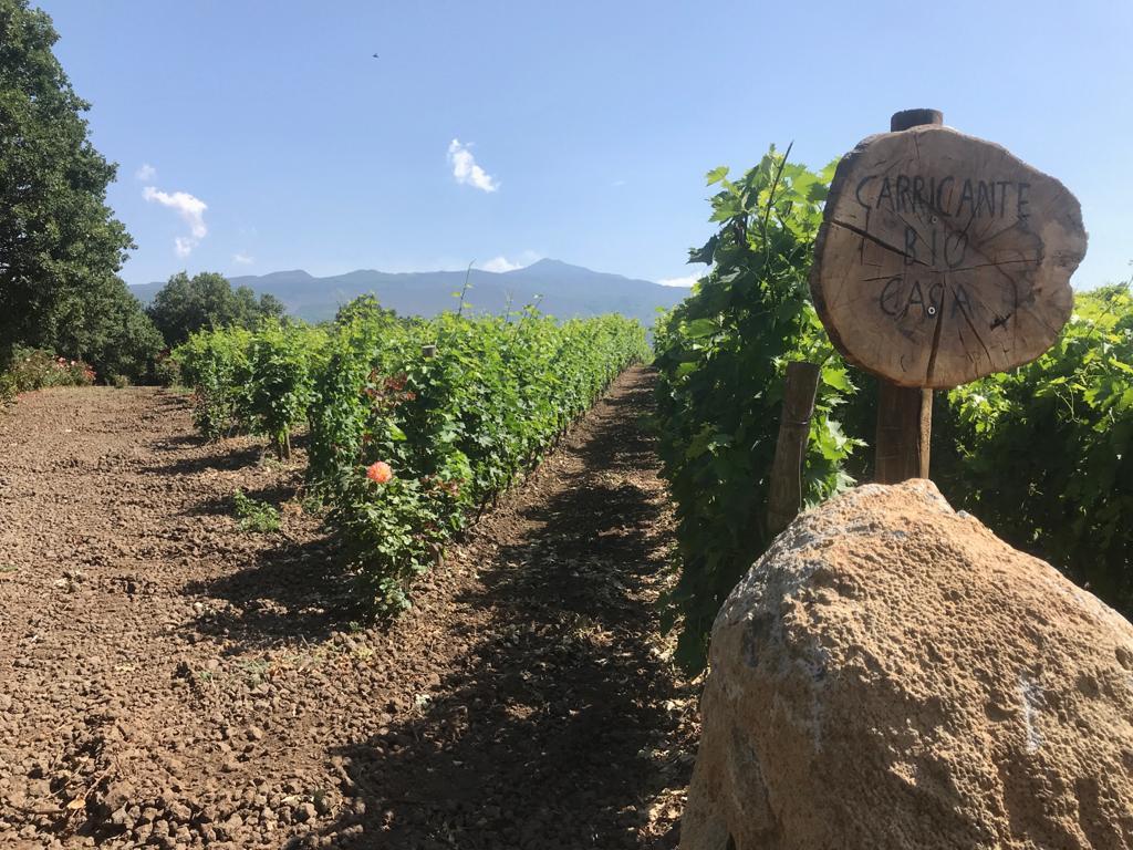 5StarWines premia la cantina Al-Cantàra | Sicilia da Gustare