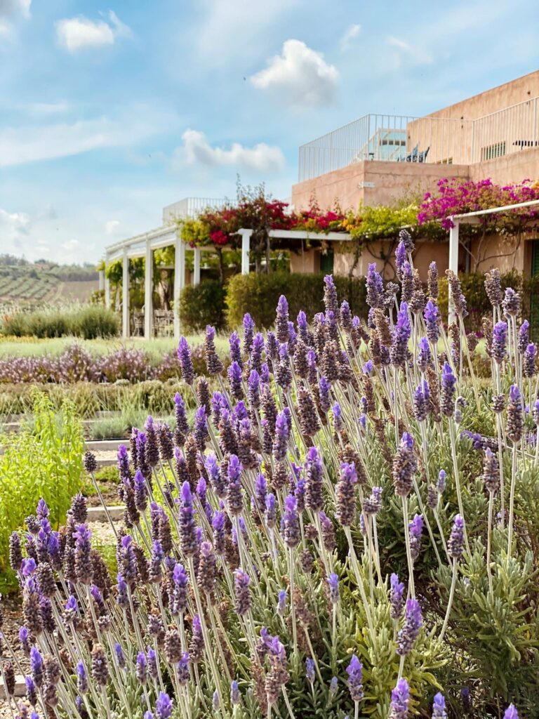 Foresteria Planeta | Sicilia da Gustare